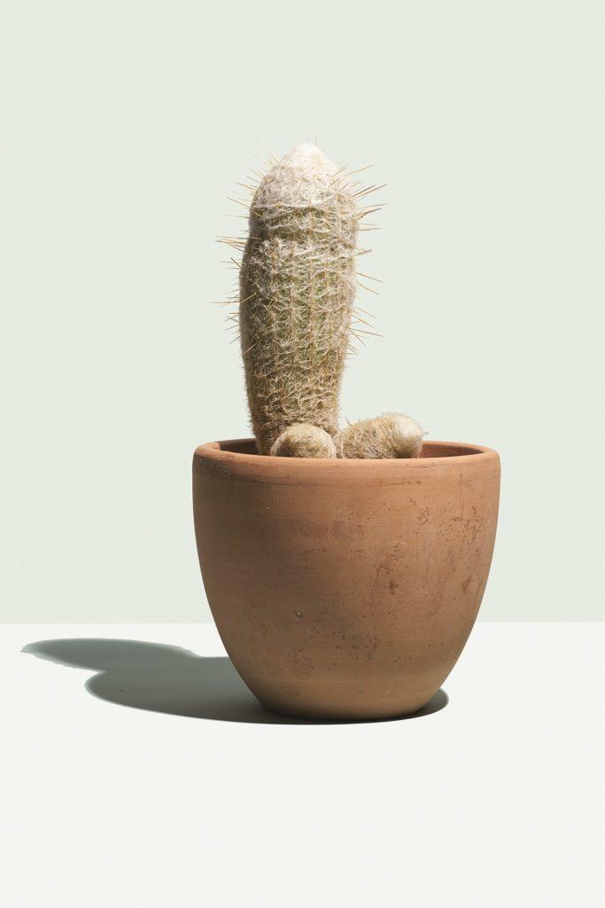 hims cactus